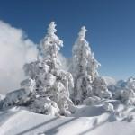 2 Schneebäume auf dem Wank