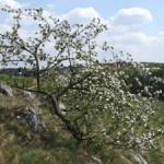 8-Blühende Landschaft