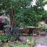 Restaurantgarten-Bodega Can Mora des VI